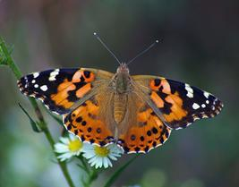 Energy Coaching Butterfly