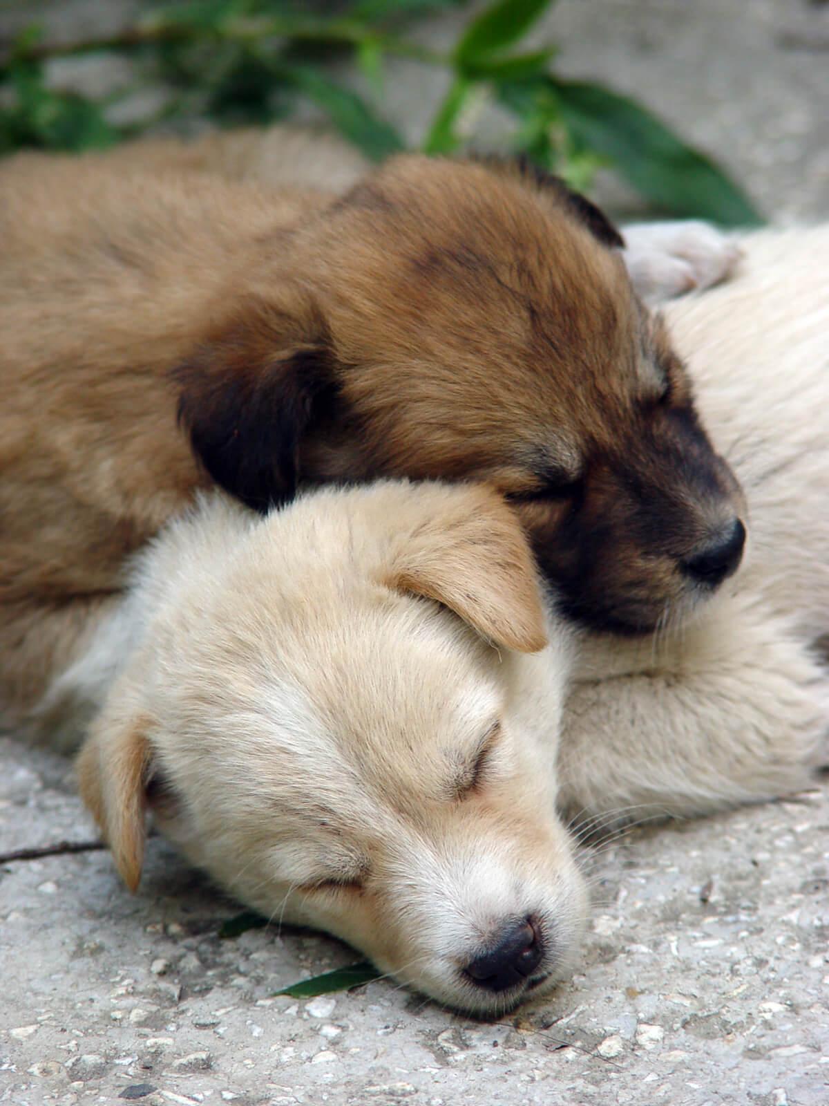 akashic cleaing & healing for pets reiki energy healing animal communication