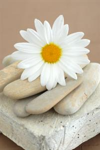 Energy Therapy Daisy with Rocks